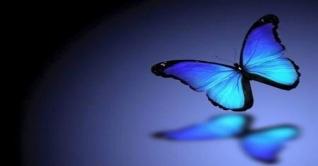 ছোট গল্প : নীল প্রজাপতি